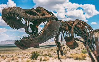 恐龙依靠独特骨骼结构承载其体重