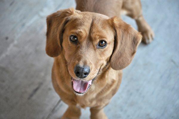 秘鲁流浪狗在街上讨食 意外获得警察局肥缺