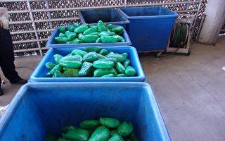 南加邊境6起運毒被截 繳獲7噸大麻
