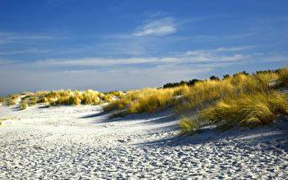 近5米长 英国海滩惊现巨型不明生物遗骸