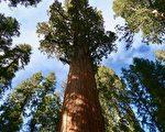 大盆地红木州立公园 上周六起重新开放