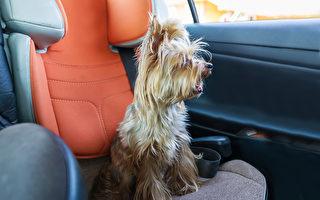 熱浪下小狗被困車內恐喪命 英男砸車窗救牠