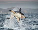 研究:1900万年前90%鲨鱼被神秘灭绝