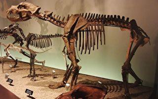 西伯利亚出土完整洞熊遗骸 专家称具全球意义