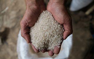 中国大肆采购粮食 或推升明年全球食品价格