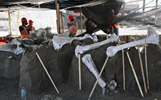 墨西哥出土两百具猛犸象遗骸 助研究其灭绝原因
