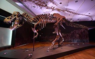 千載難逢 完整霸王龍化石「史丹」即將拍賣