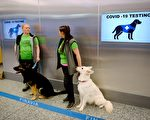 芬蘭機場啟用小狗檢測中共病毒 10秒搞定