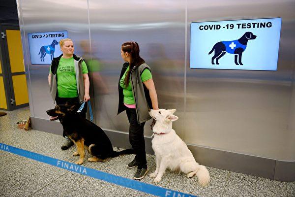 张林:芬兰机场用侦测犬测试中共病毒