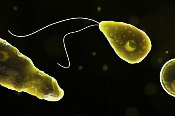 食腦變形蟲入侵德州八城市 一度禁用自來水