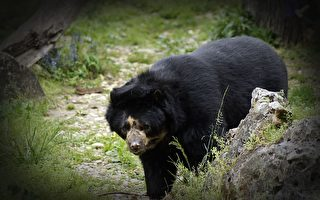 美国男士后院泳池旁打盹 黑熊唤醒他:别睡了