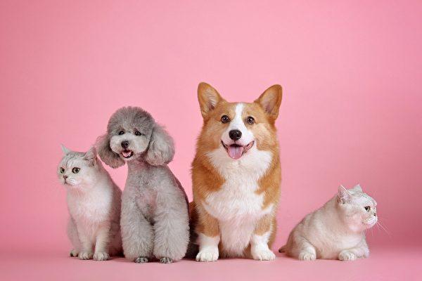 研究:看可愛動物有益健康 血壓心率都降低