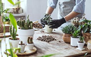 多肉植物, 叶插, 枝插, 空气生根法