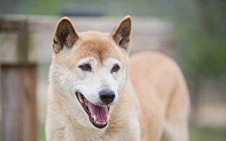 銷聲匿跡50年 會唱歌的小狗再度現身野外