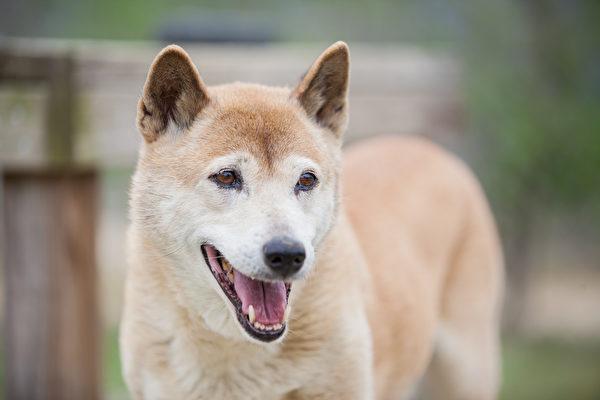 销声匿迹50年 会唱歌的小狗再度现身野外