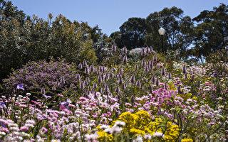组图:南半球入春 西澳珀斯奇花争艳