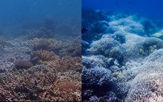 台垦丁合界珊瑚礁白化逾5成