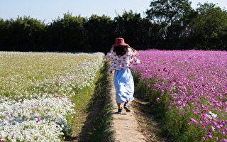 2020桃園花彩節楊梅展亮相 體驗酪農產業秀才茶