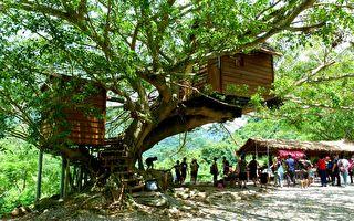 老榕树上的童年梦 台东布农树屋探秘