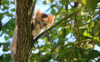 小猫受困树上 英国小镇数百人花4天救援