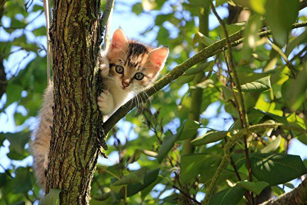 小貓受困樹上 英國小鎮數百人花4天救援