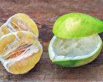 柚子皮別丟!自製3種「天然清潔劑」去污又除臭