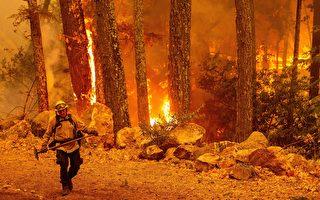 湾区高温火险高 川普批准加州火灾援助款