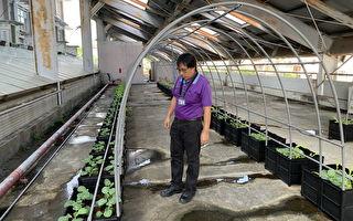 蚓菜共生转化生厨余 环保局推绿色循环经济