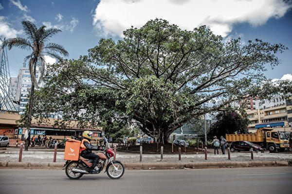 中資公路修築欲挖百年老樹 肯亞總統救下