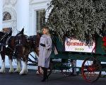 组图:第一夫人迎圣诞树 开启白宫圣诞活动