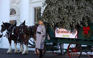 組圖:美國第一夫人在白宮迎接聖誕樹