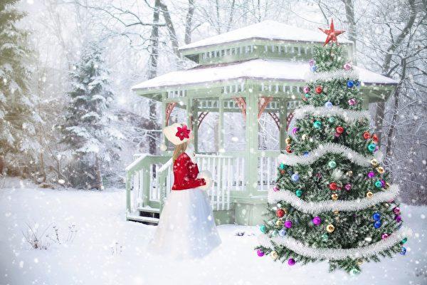 何時購買真的聖誕樹 才能維持到假期後?