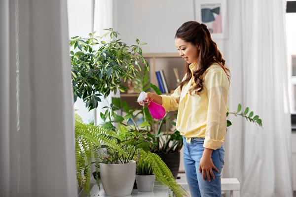 植物也有个性 5种疗愈身心的室内植物