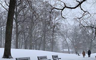 组图:风雪中的纽约公园 如白色童话世界