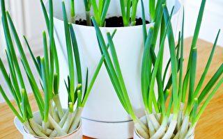 【美食天堂】2種快速種植蔥的方法 哪個更快?