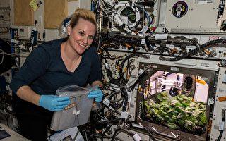 史上首次 美太空人採收外太空種植的蘿蔔