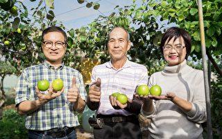 戰勝命運考驗 果農陳勝華種出碩大「蘋安棗」