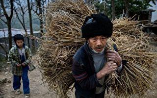 中共發「一號文件」被指割農民韭菜 專家為當局洗地遭轟