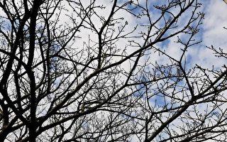 麥立:大樹練書法