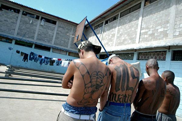 美CBP:抓捕非法入境MS-13帮派成员