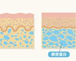 护肤霜、保健食品等商品标榜补充胶原蛋白,真的有效吗?(Shutterstock)