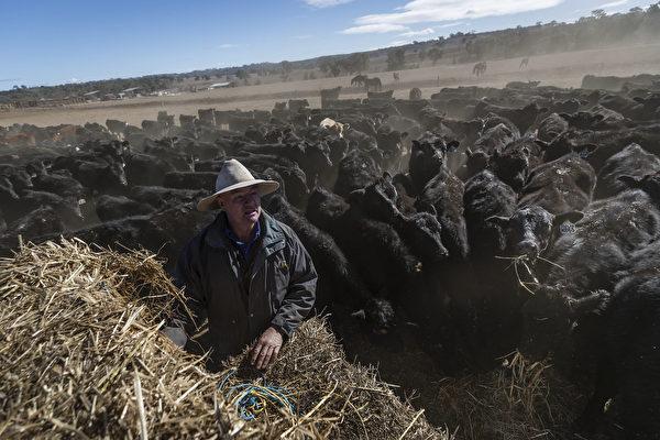 澳洲農業勞動力