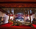 最瀕危全球僅存四隻 越南發現唯一雌斑鱉