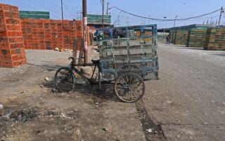 组图:印度禽流感蔓延十邦 政府加强管制