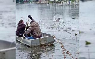 印第安纳州民众冒险从冰冷湖中救出小鹿