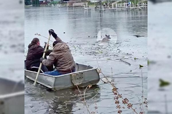 印第安納州民眾冒險從冰冷湖中救出小鹿