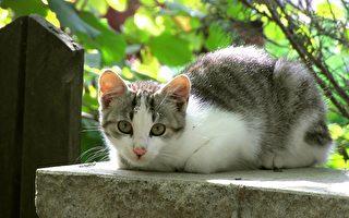 小猫阻止小男童抓栏杆 网民:守护天使