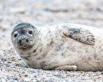 有人花钱请你住在爱尔兰小岛 与海豹作伴