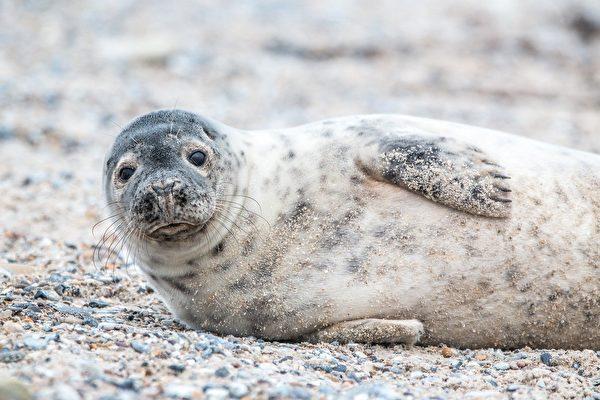 有人花錢請你住在愛爾蘭小島 與海豹作伴