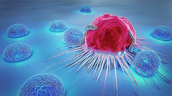 新方法可控制一线免疫细胞排异反应